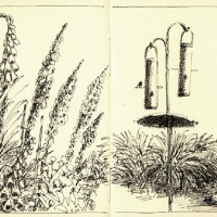 Foxglove and Feeders