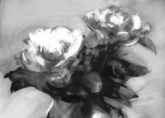 white roses; graphite on mylar