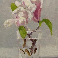 Magnolia, 050908