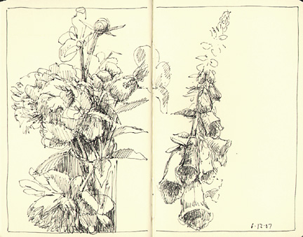 flowers_61207