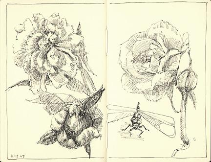 flowers_61707