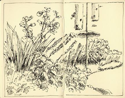 garden_7107