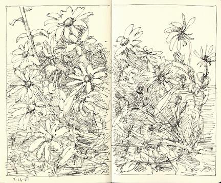 garden_71607