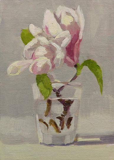 050908_magnolia_wb
