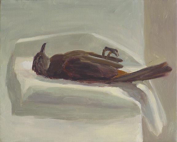 Catbird_051608