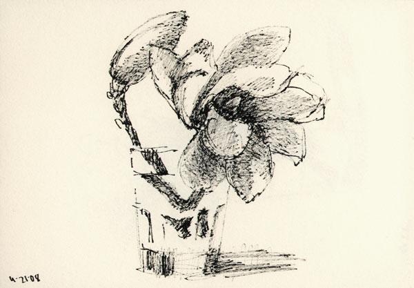 magnolia_sk_042108wb