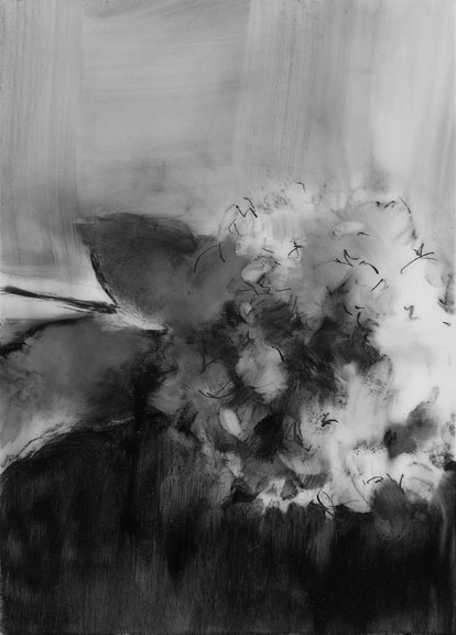 072710 hydrangea; graphite on mylar