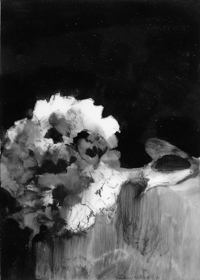 072710 hygrangea; graphite on mylar