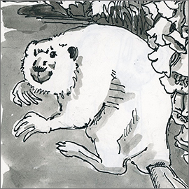 Beaver, b&w ink drawing, detail